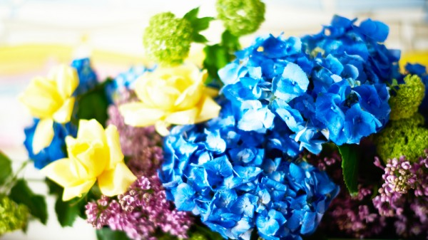 花の撮影 紫陽花